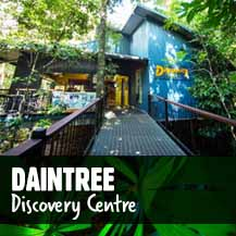 Daintree Discovery Centre - #1 Attraction in the Daintree Rainforest
