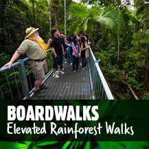 Rainforest Boardwalk - Daintree Forest Walks