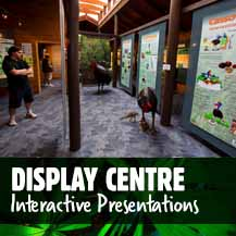 Daintree Rainforest Interpretive Display Centre - Daintree Discovery Centre