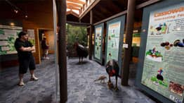 Interpretive Display Centre - Daintree Discovery Centre