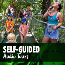 Audio Tours - Daintree Rainforest Tours